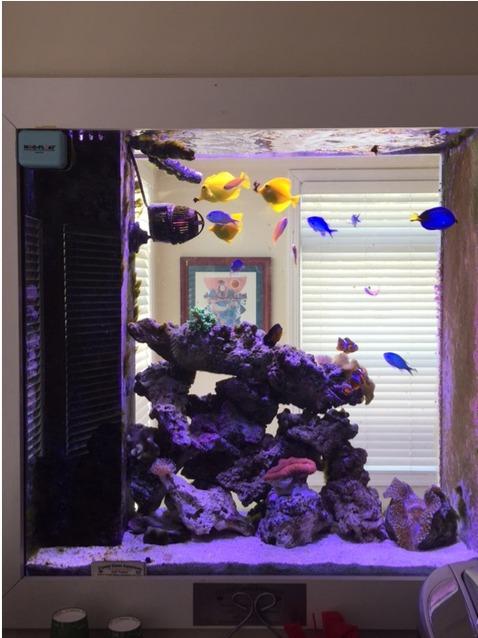 Saltwater Aquariums Gallery Crystal Clean Aquariums Ct